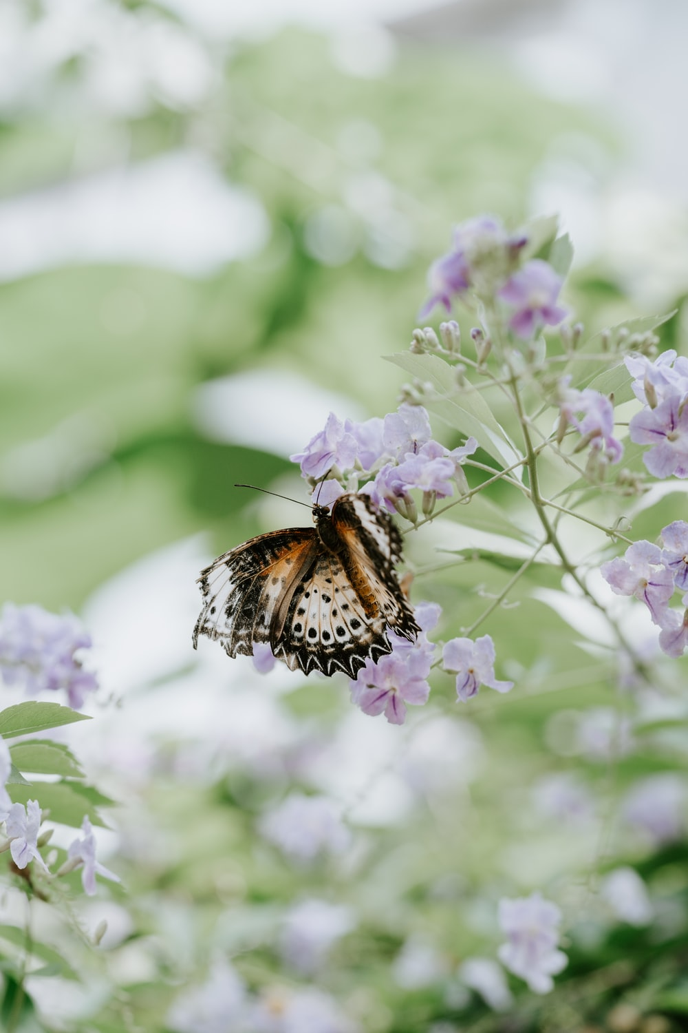 white and brown butterfly on purple petaled flowers