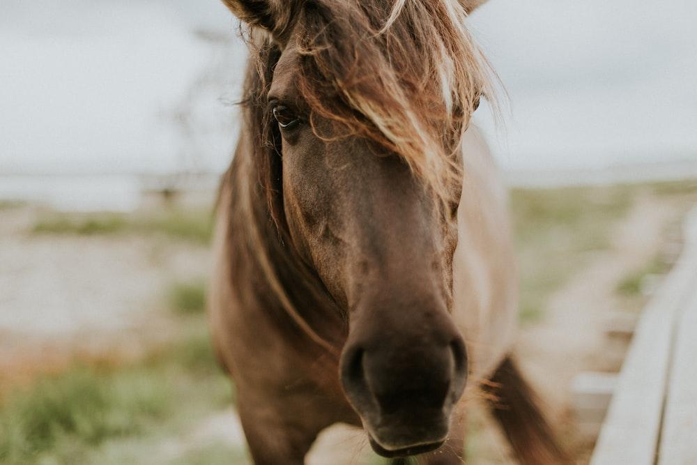 macro shot photography of brown horse