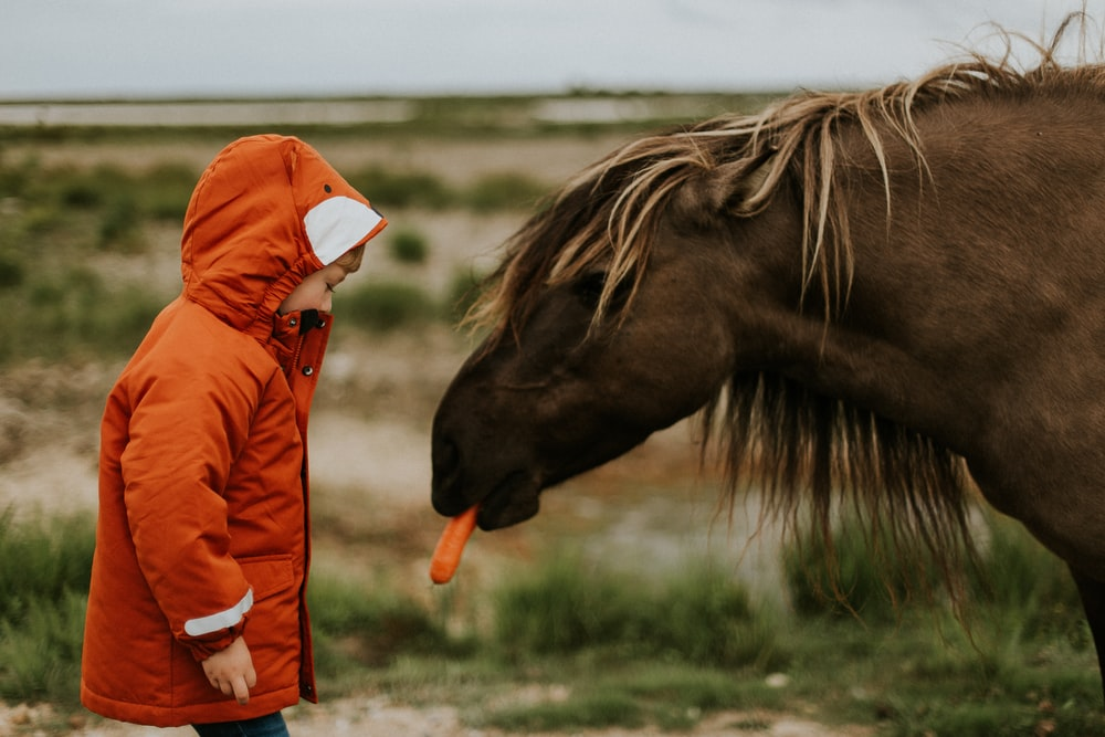 selective focus photography of toddler standing in front of horse