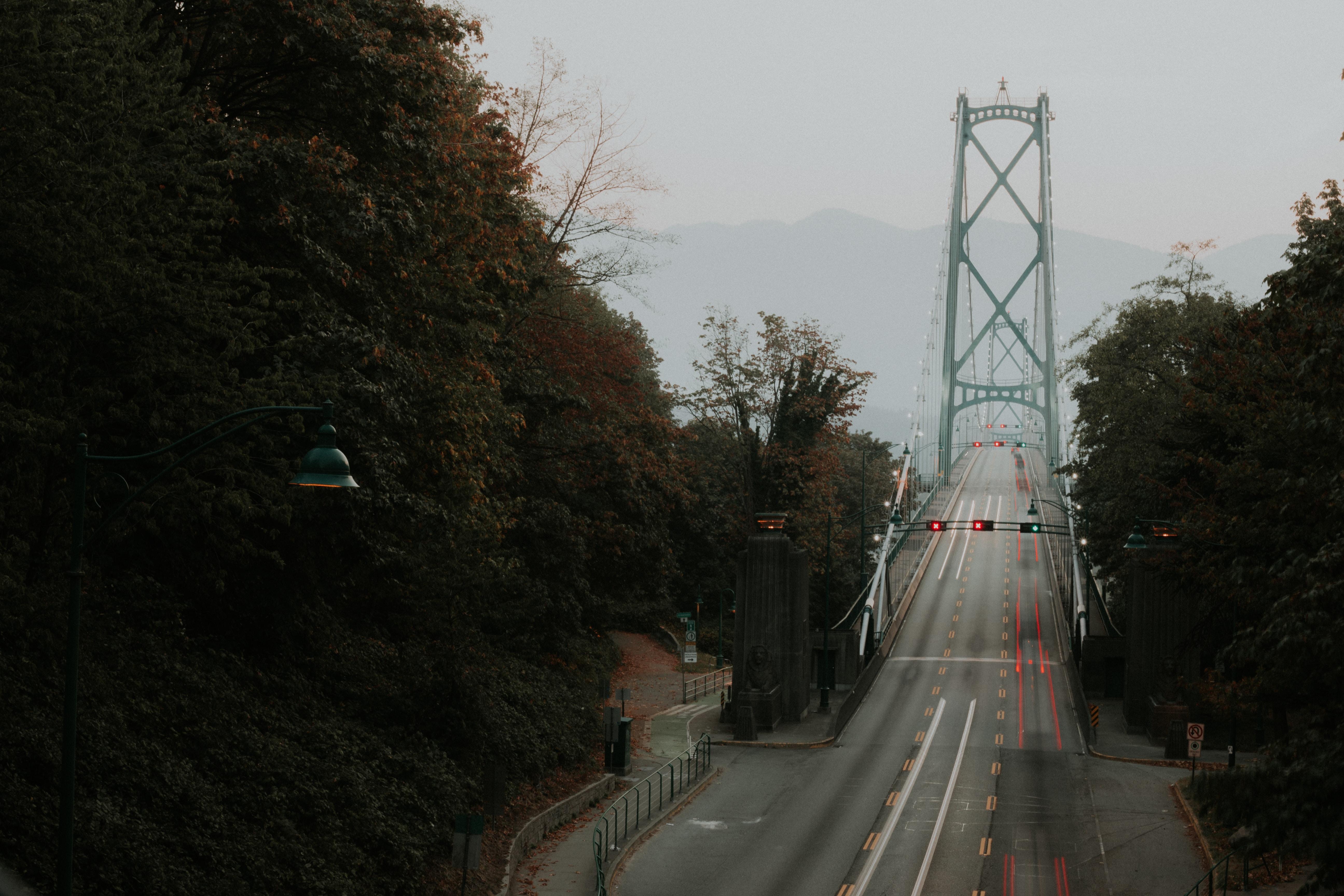 gray bridge surrounded of trees