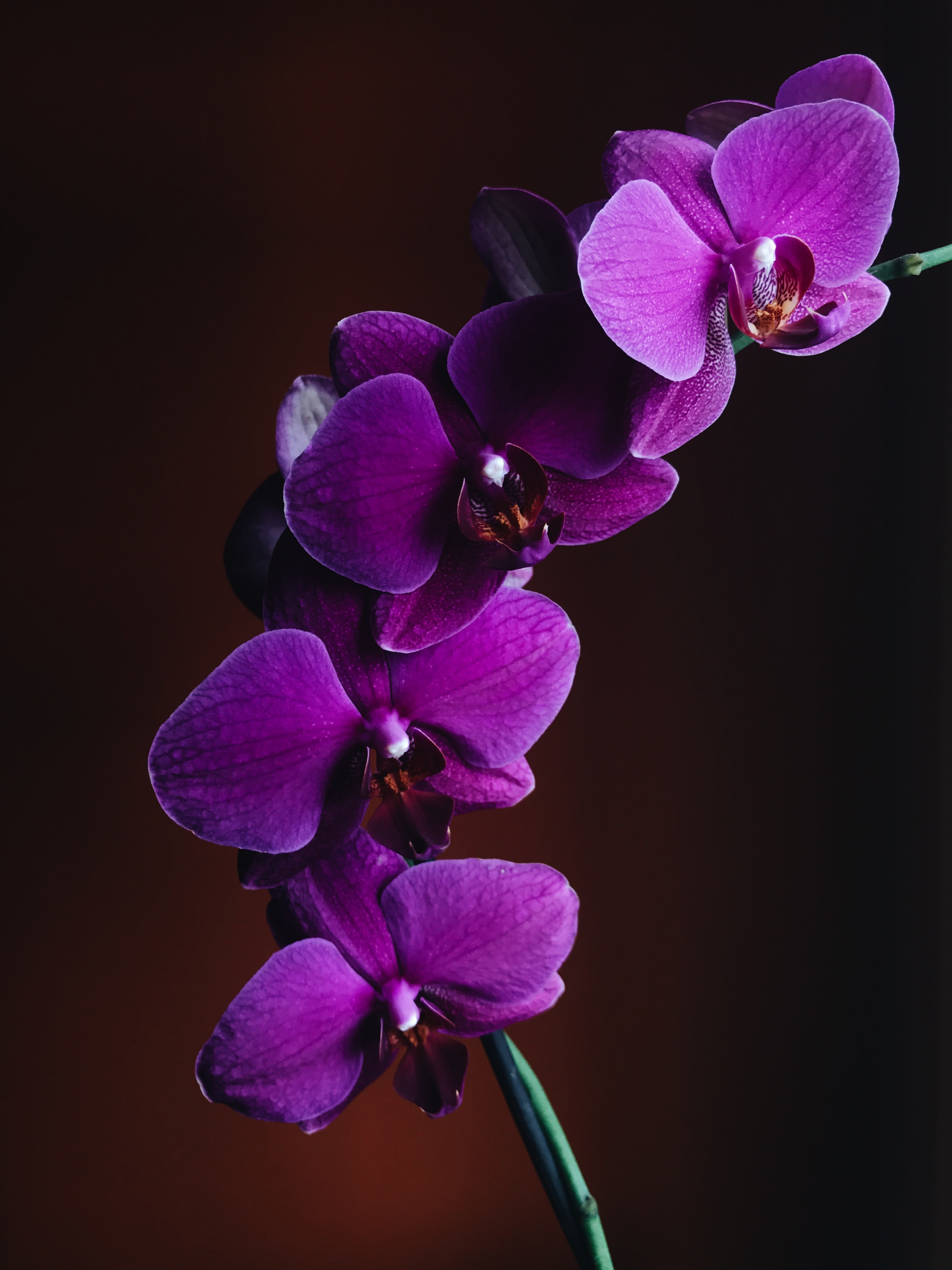 close-up photo of purple Orchid flower