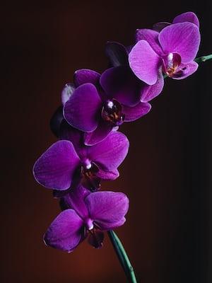 3956. Virágok