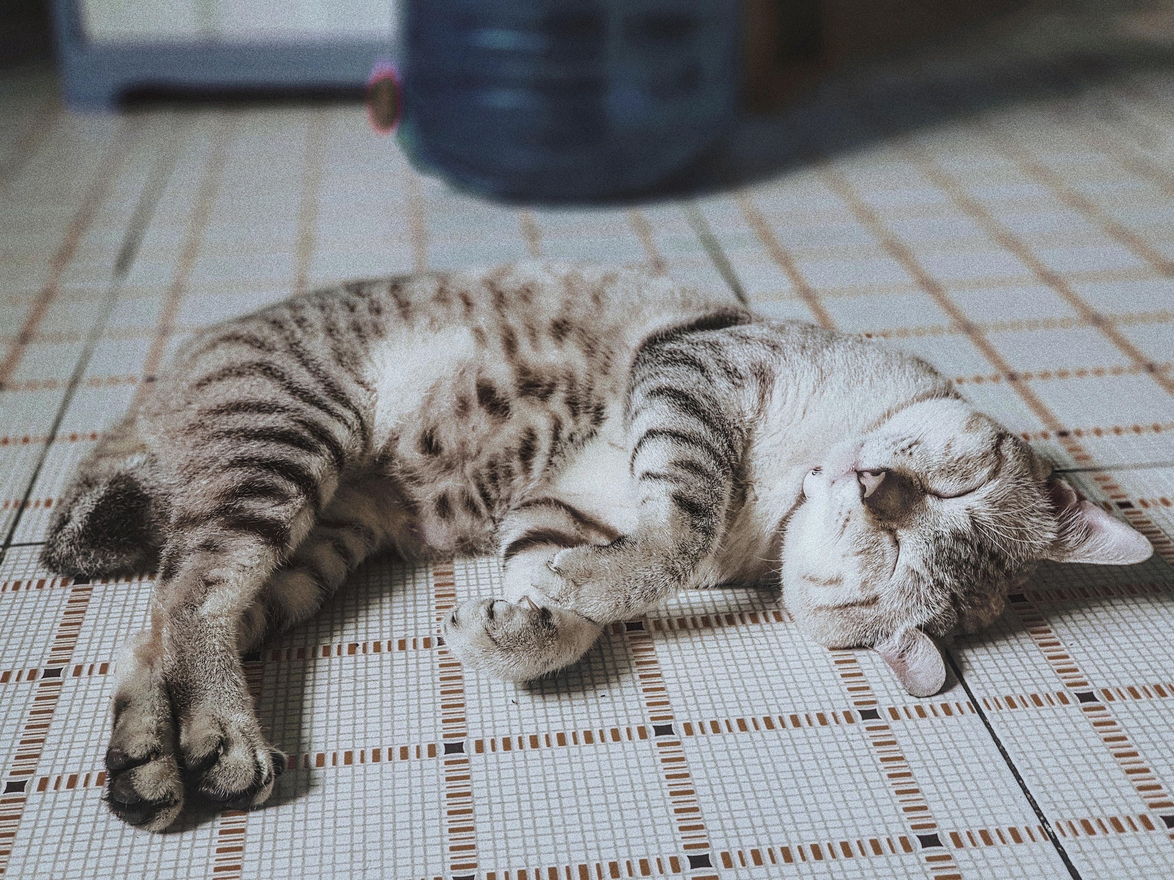 gray tabby kitten sleeping on white surface