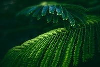 selective focus photography of green pinate leaf plant
