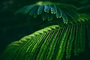 1602. Növények világa