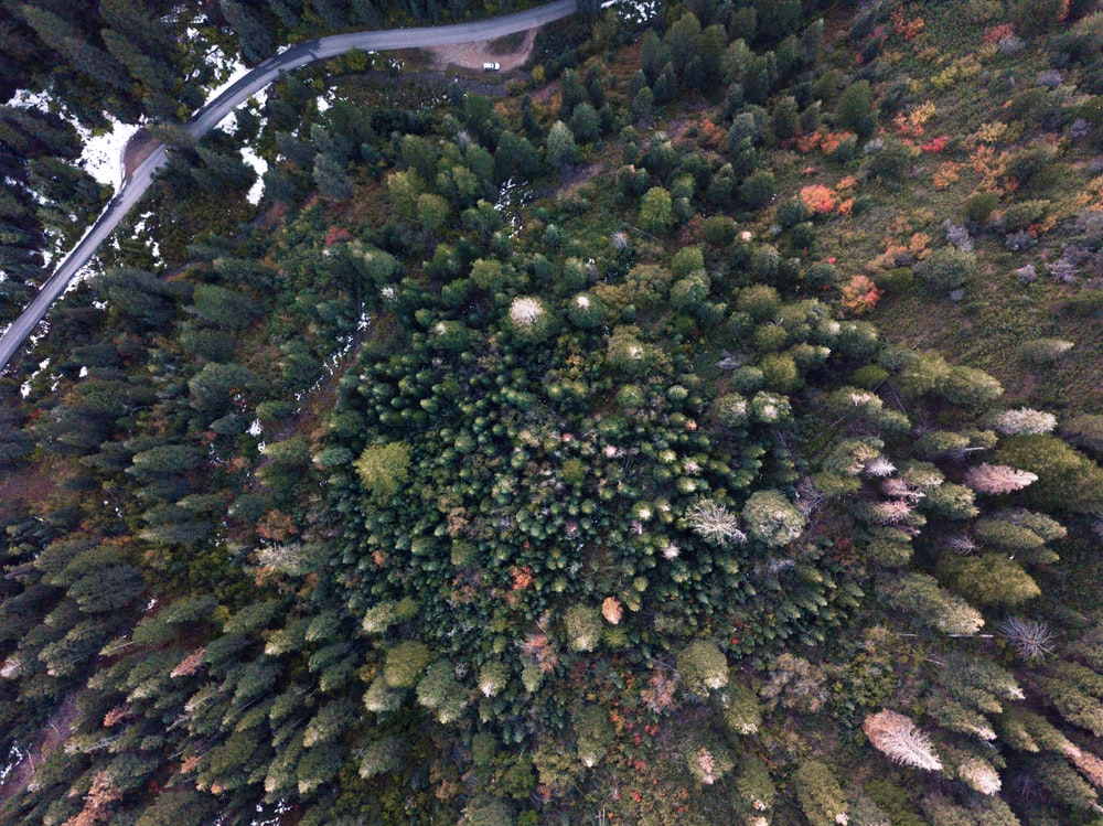 aerial photography of pine tree forest