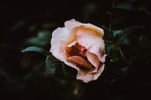 3985. Virágok