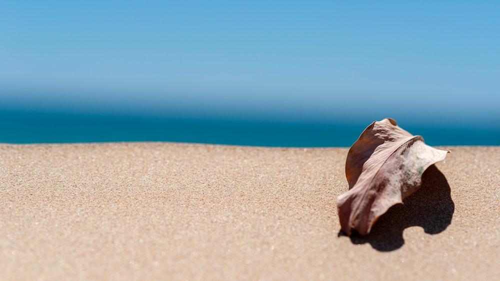 dried leaf on sand