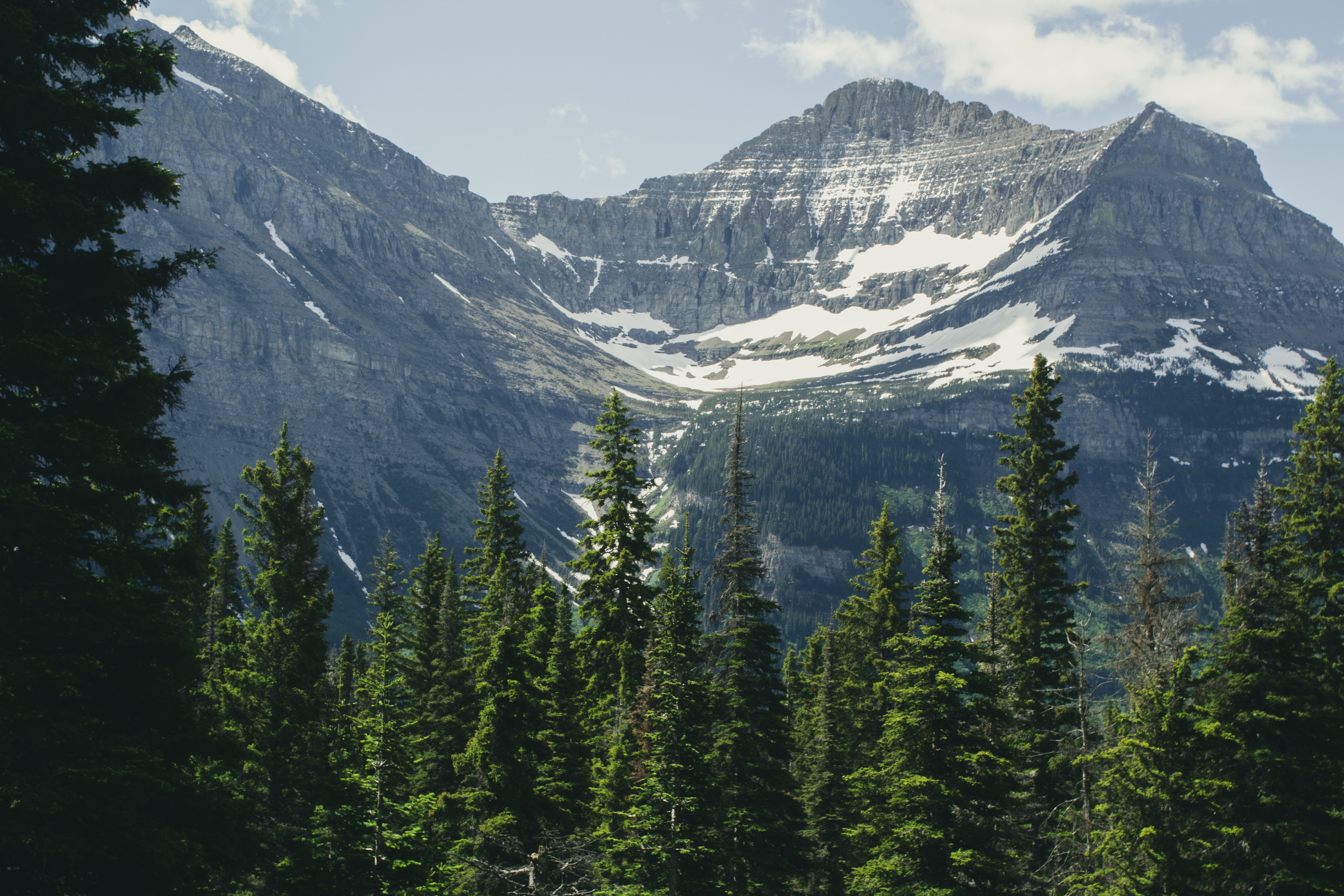 green pine tree and icy mountain