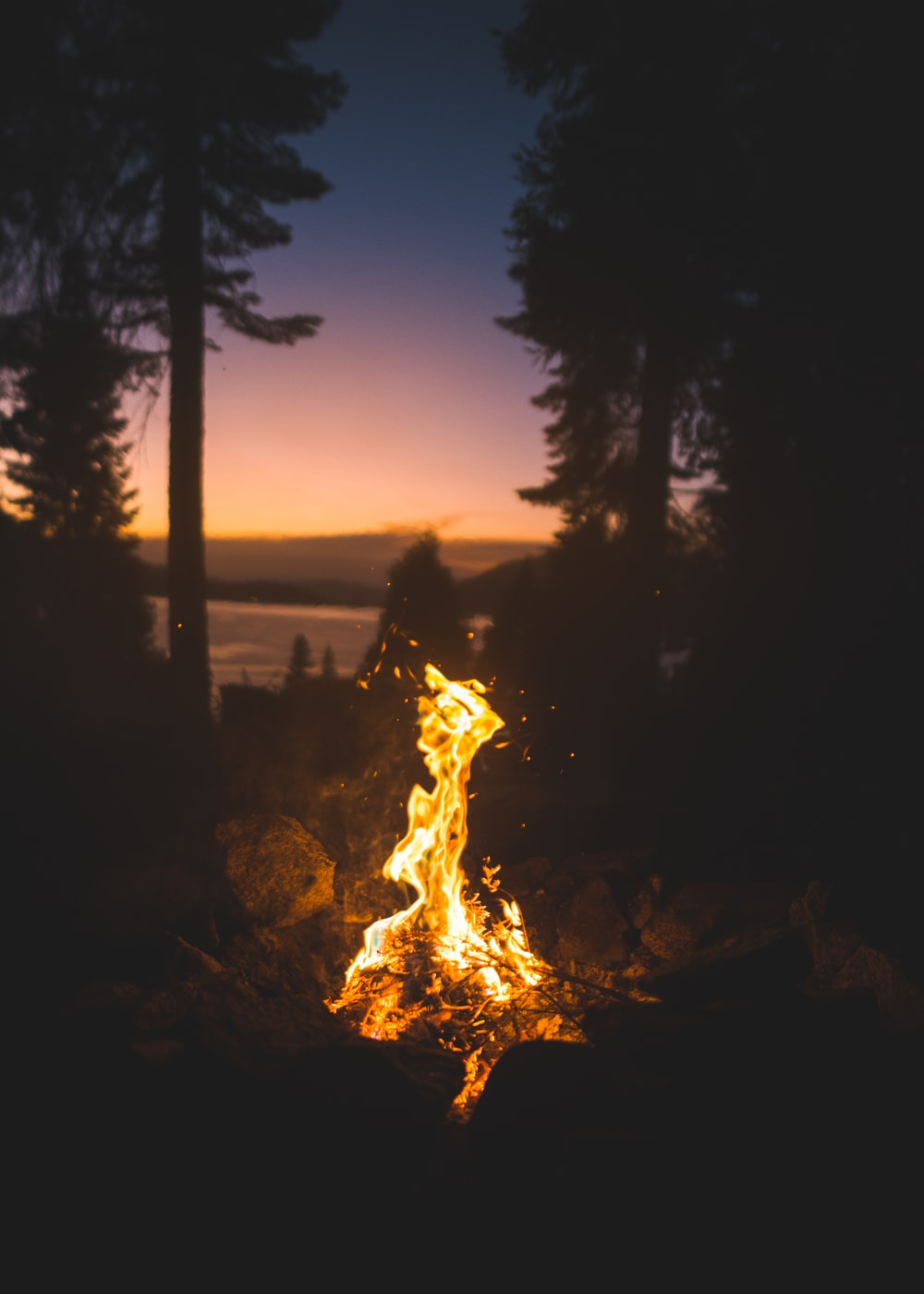 firepit near trees during night time