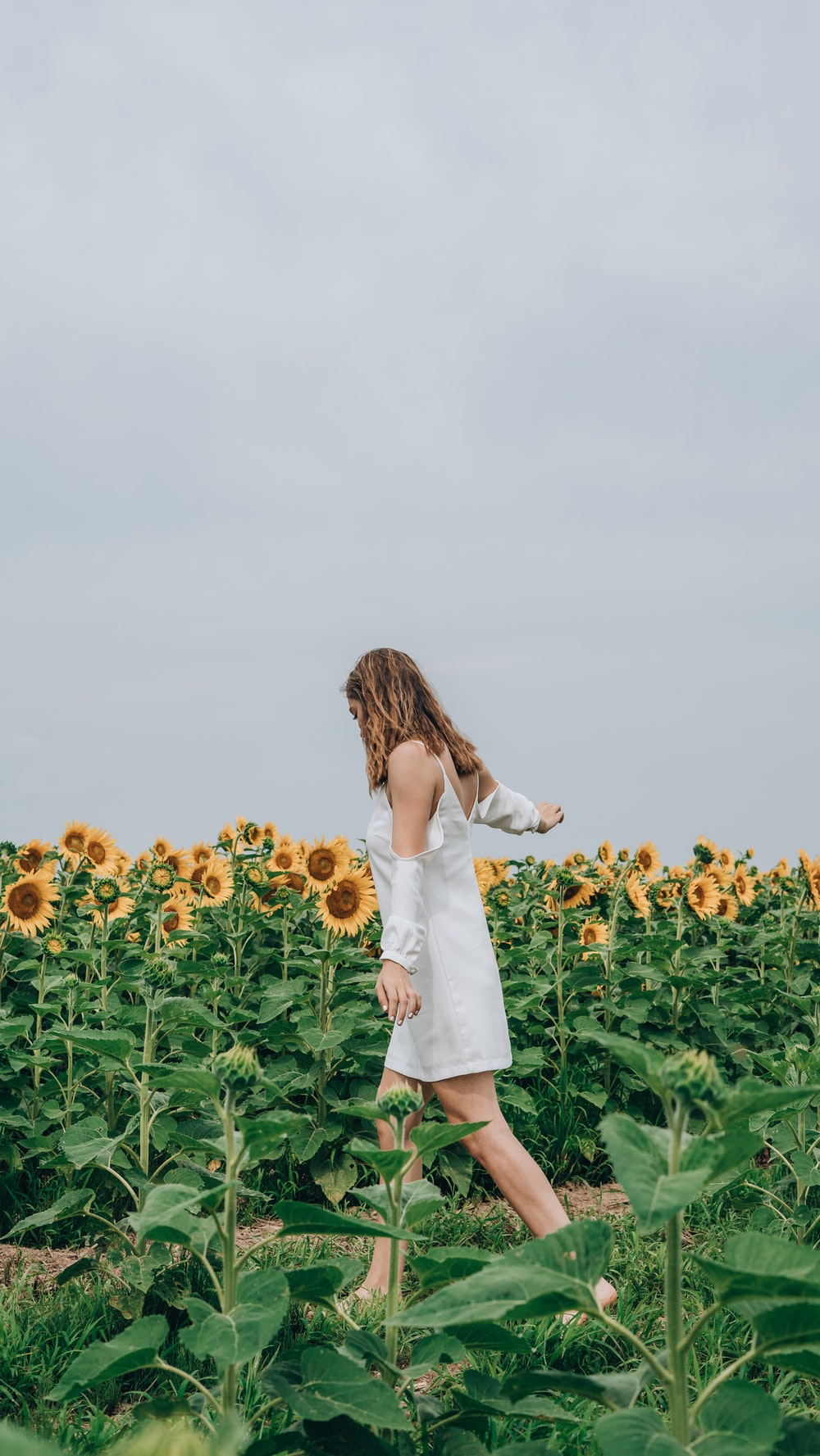 woman standing beside bed of sunflower