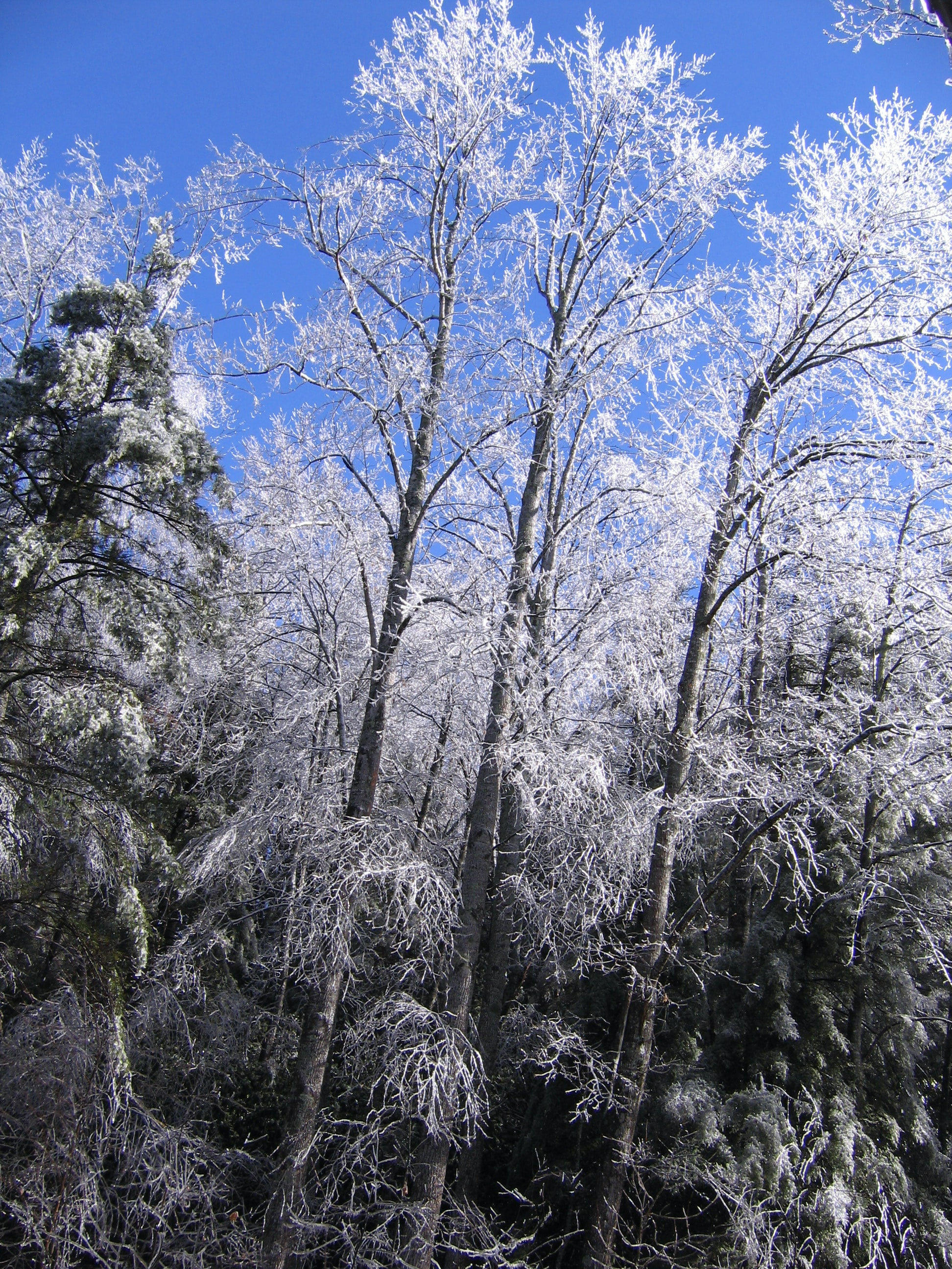 photo of snow covered trees under blue sky