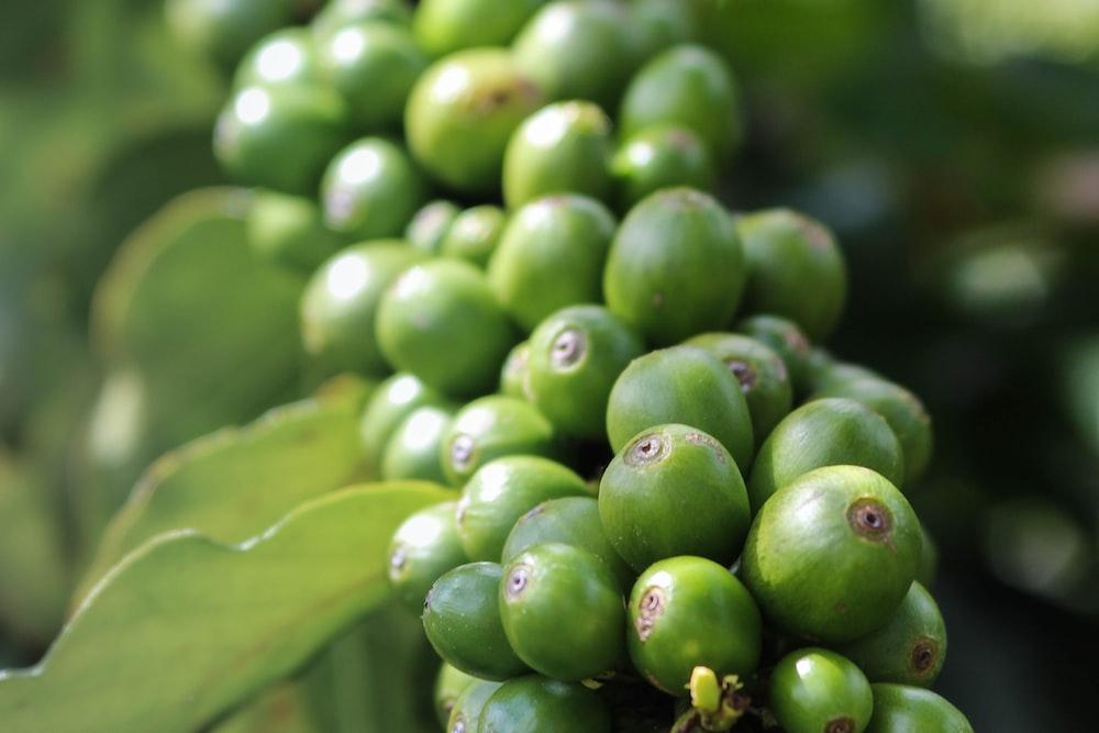 shallow focus photo of green fruit