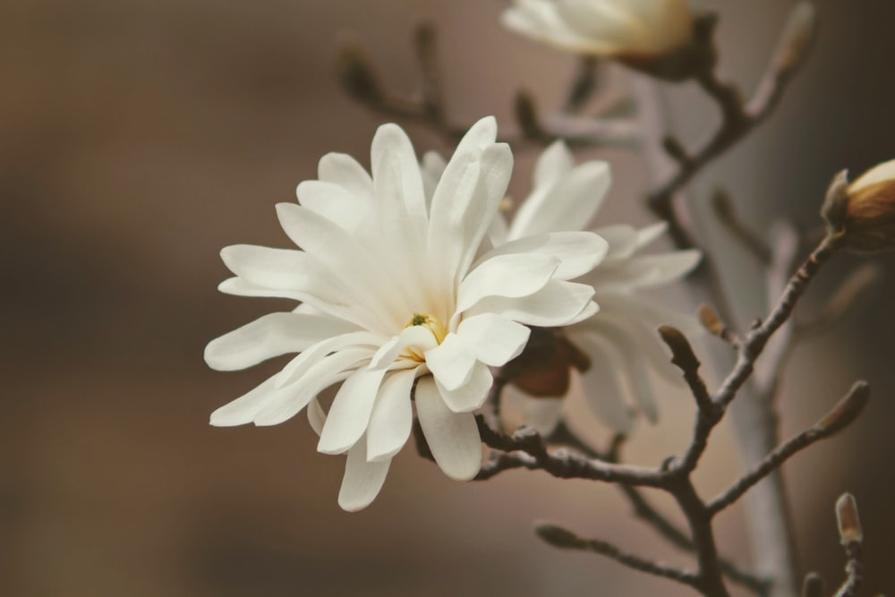 100 white flower pictures download free images on unsplash selective focus photography of white petaled flower mightylinksfo