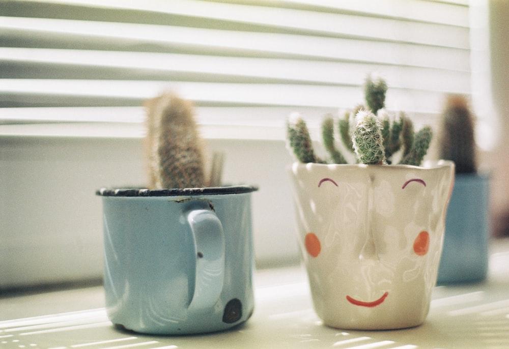 cactus plant in ceramic cups