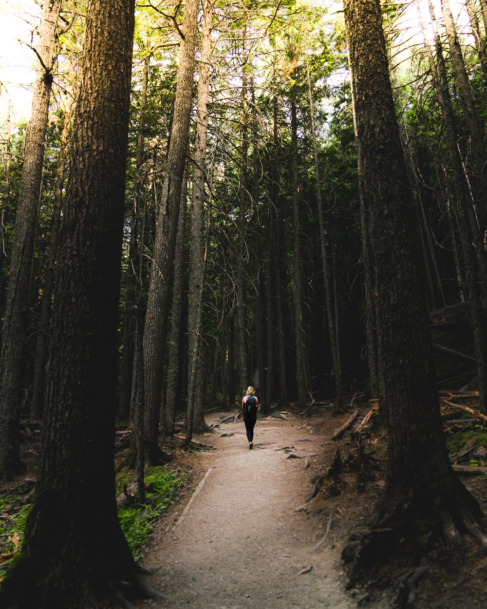 person walking surrounded by trees