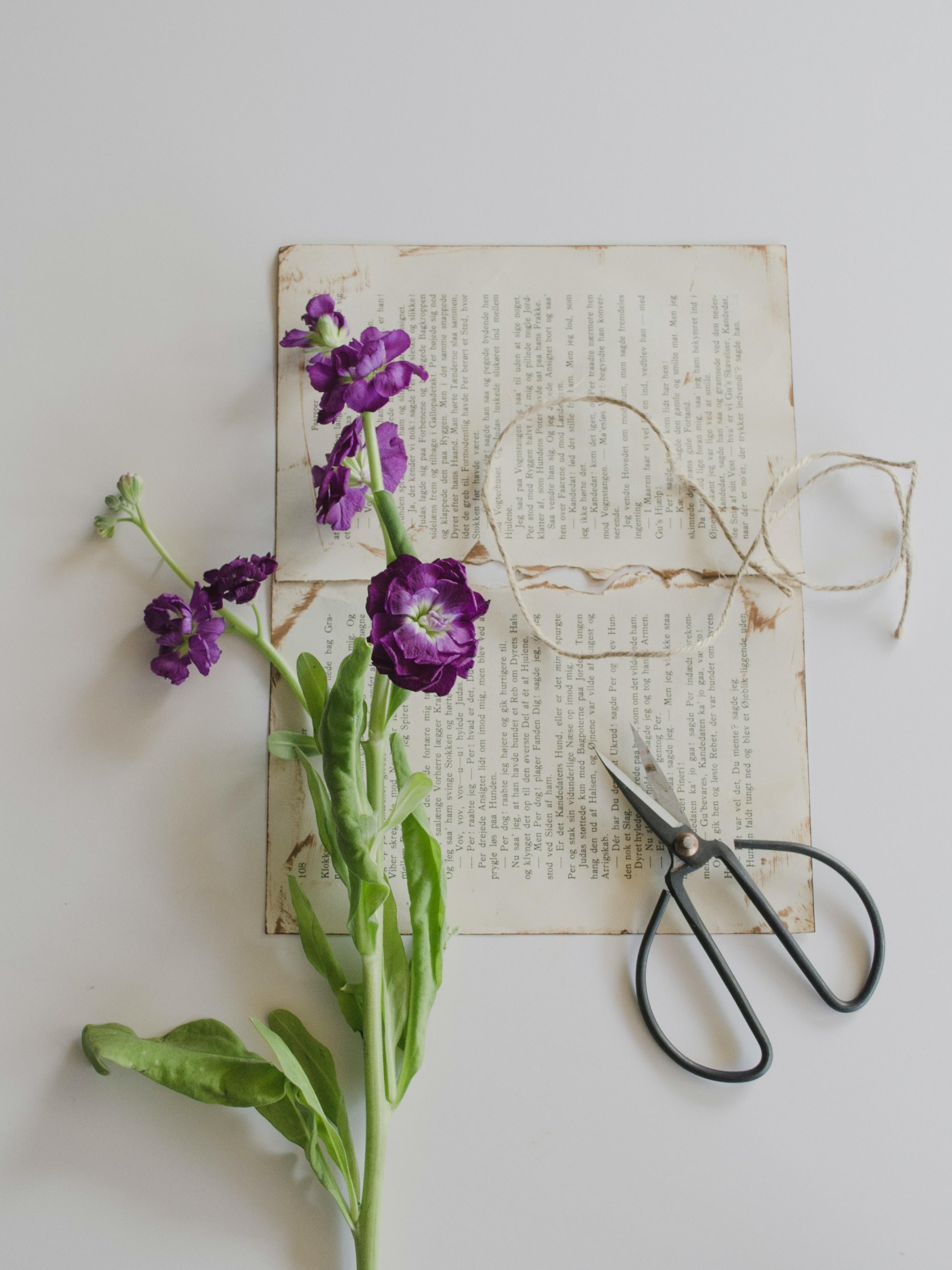 purple petaled flowers on printing paper beside shears