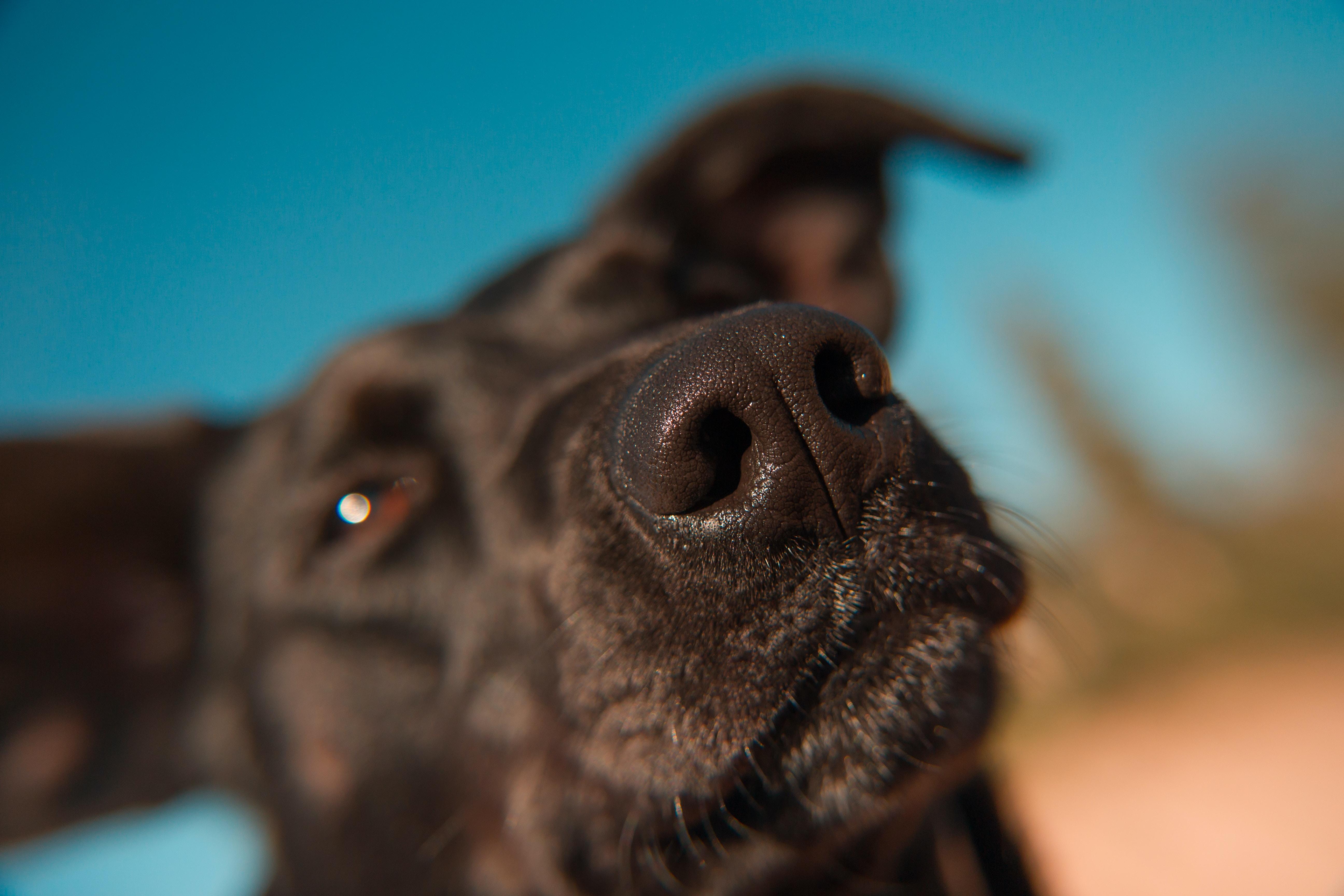 close-up of tan dog head