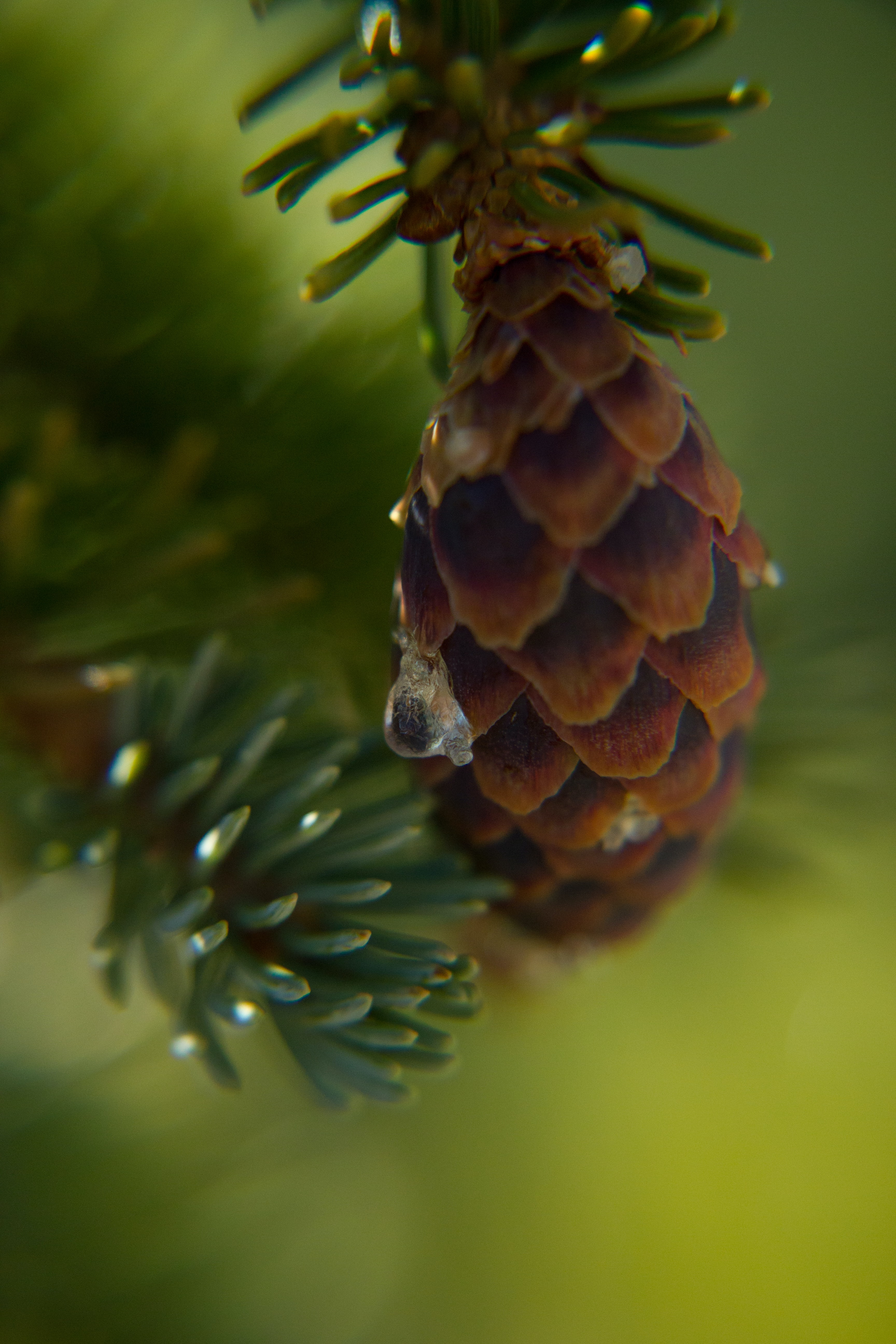 shallow focus photo of pinecone