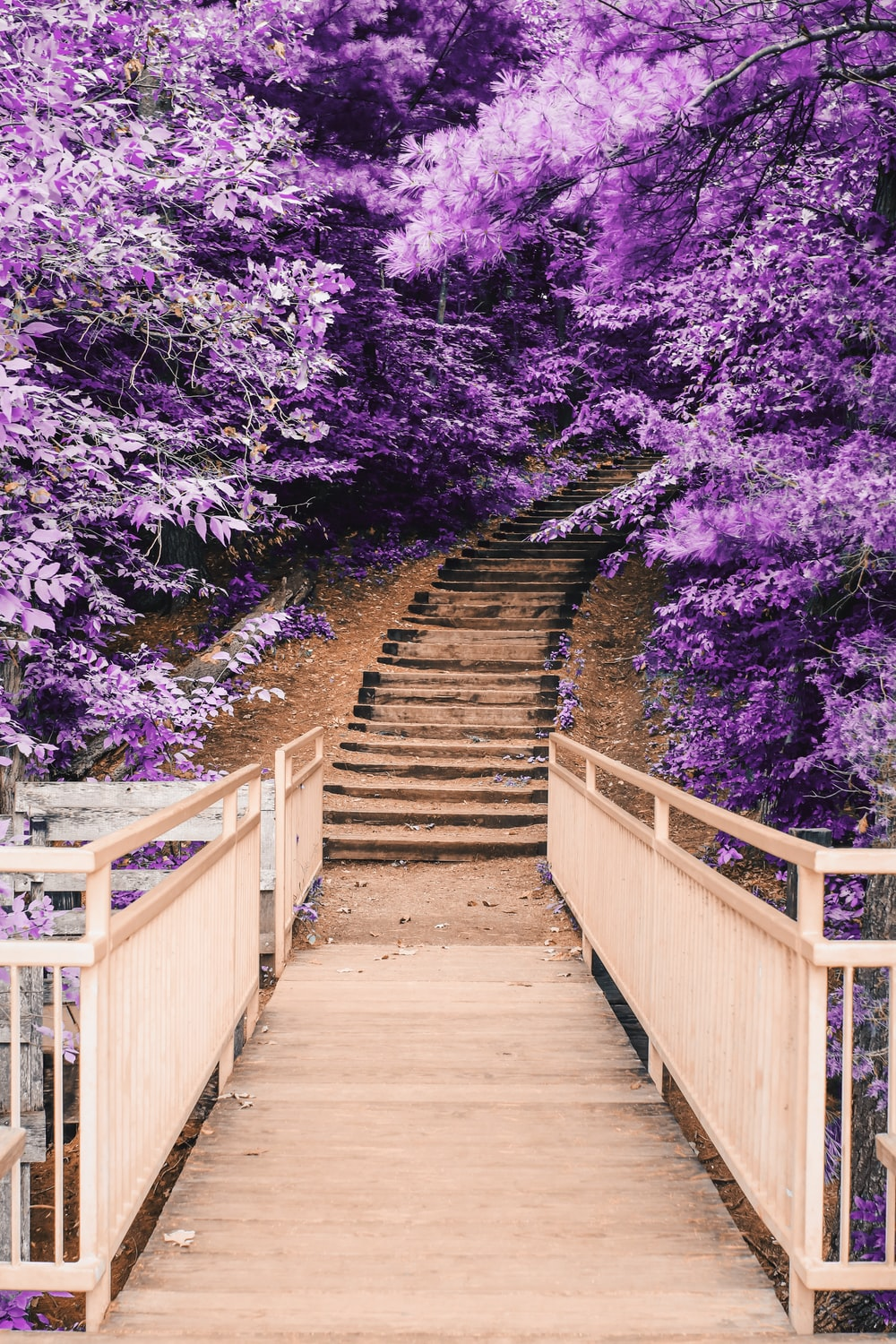 wooden bridge and staircase between purple trees