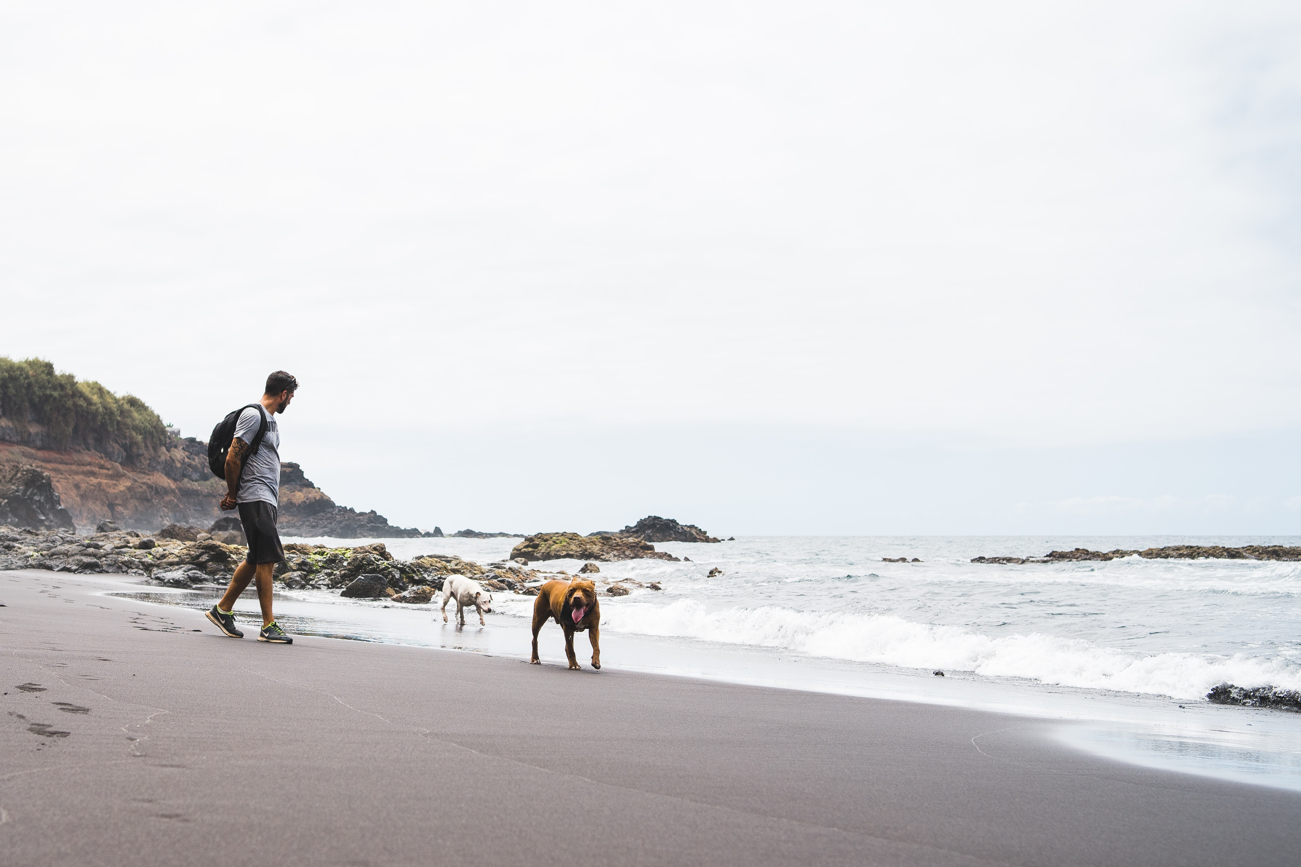 man and dogs on the seashore