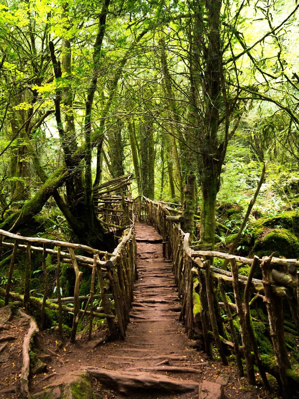 photo of bridge between green trees