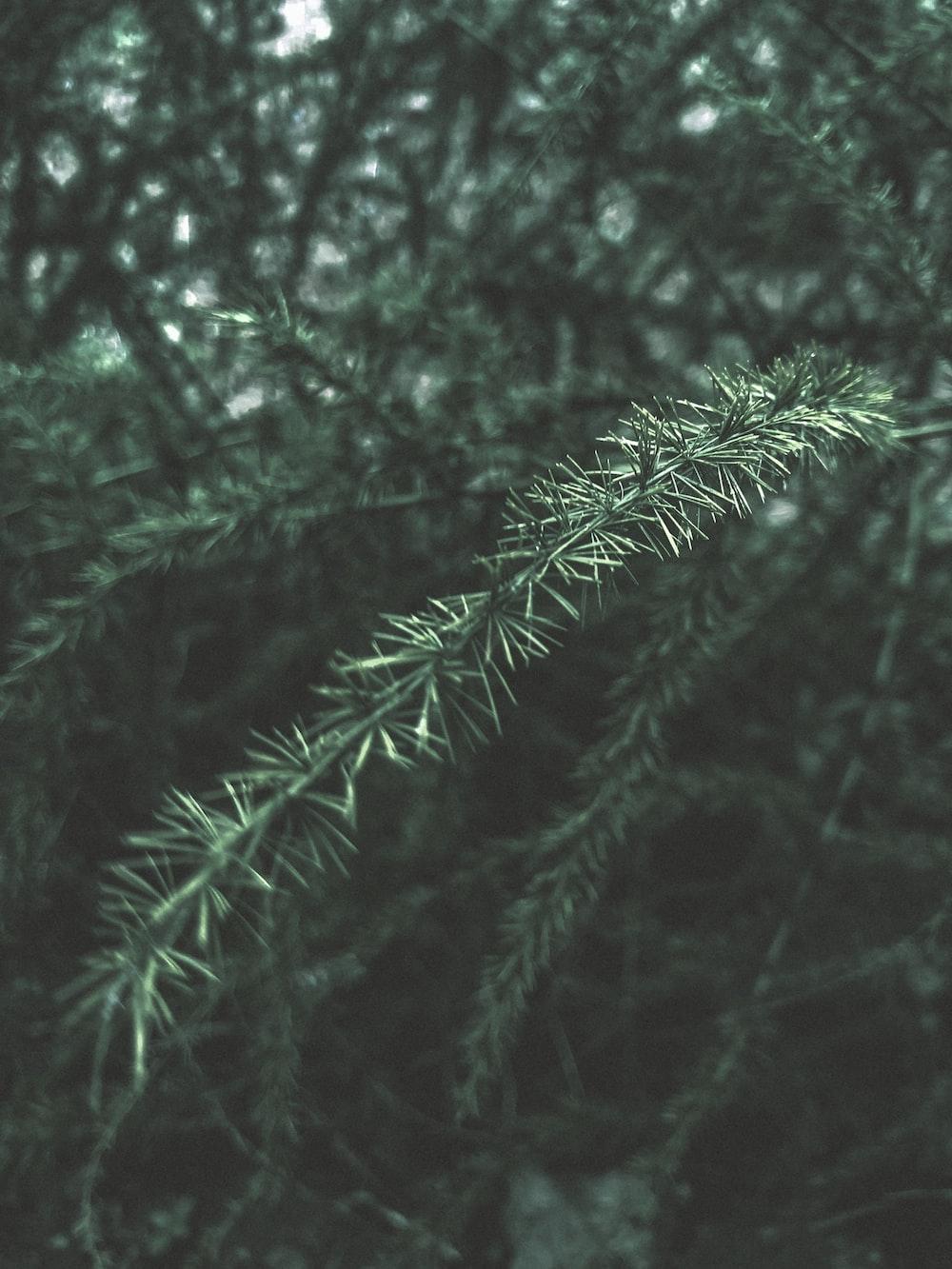 green leaf on macro shot