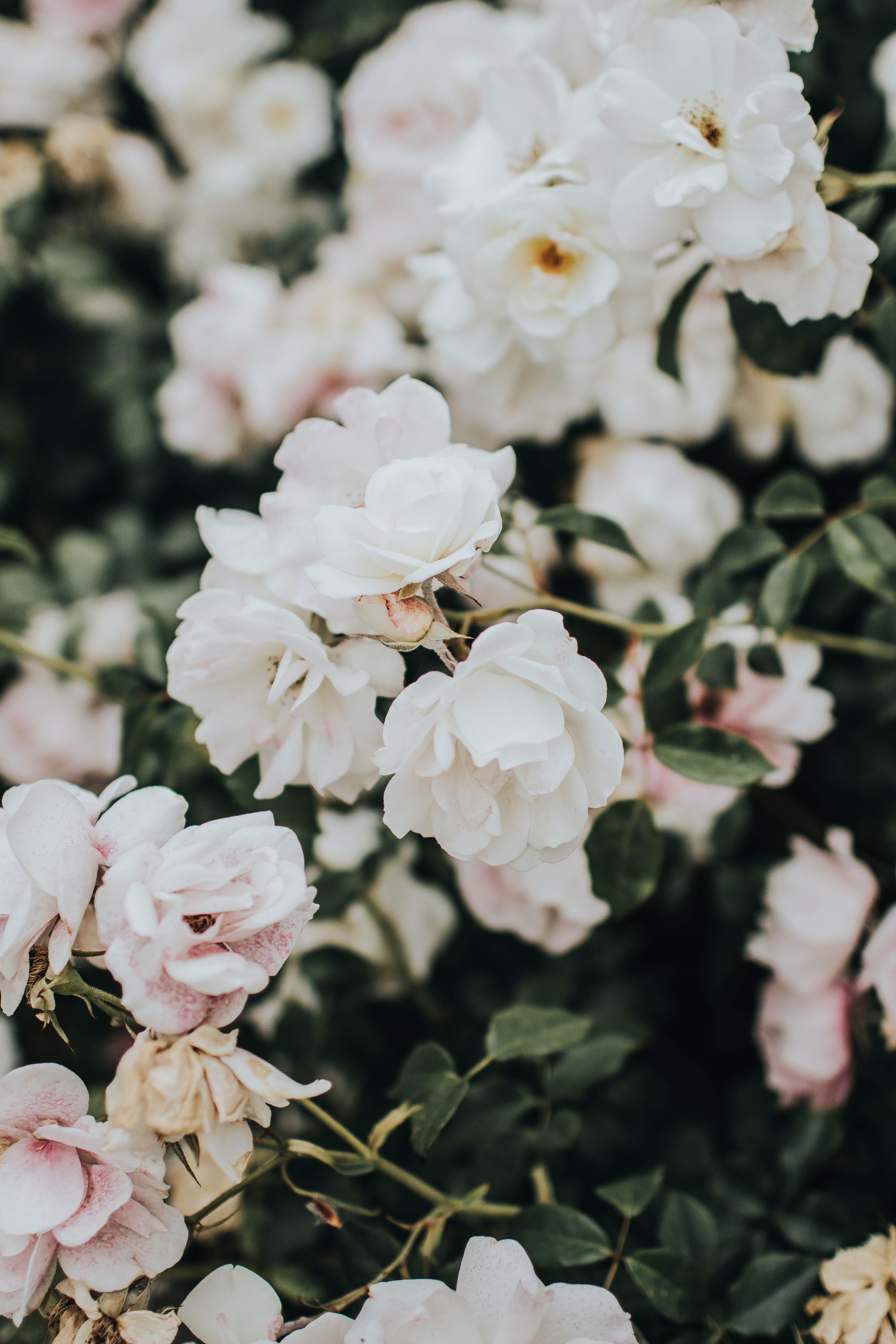 white petal flowers blooming during daytime