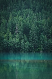 green leaf trees across calm body of water