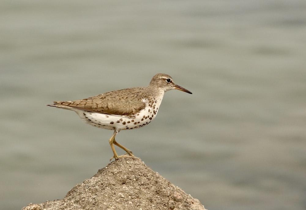 brown bird standing on rock
