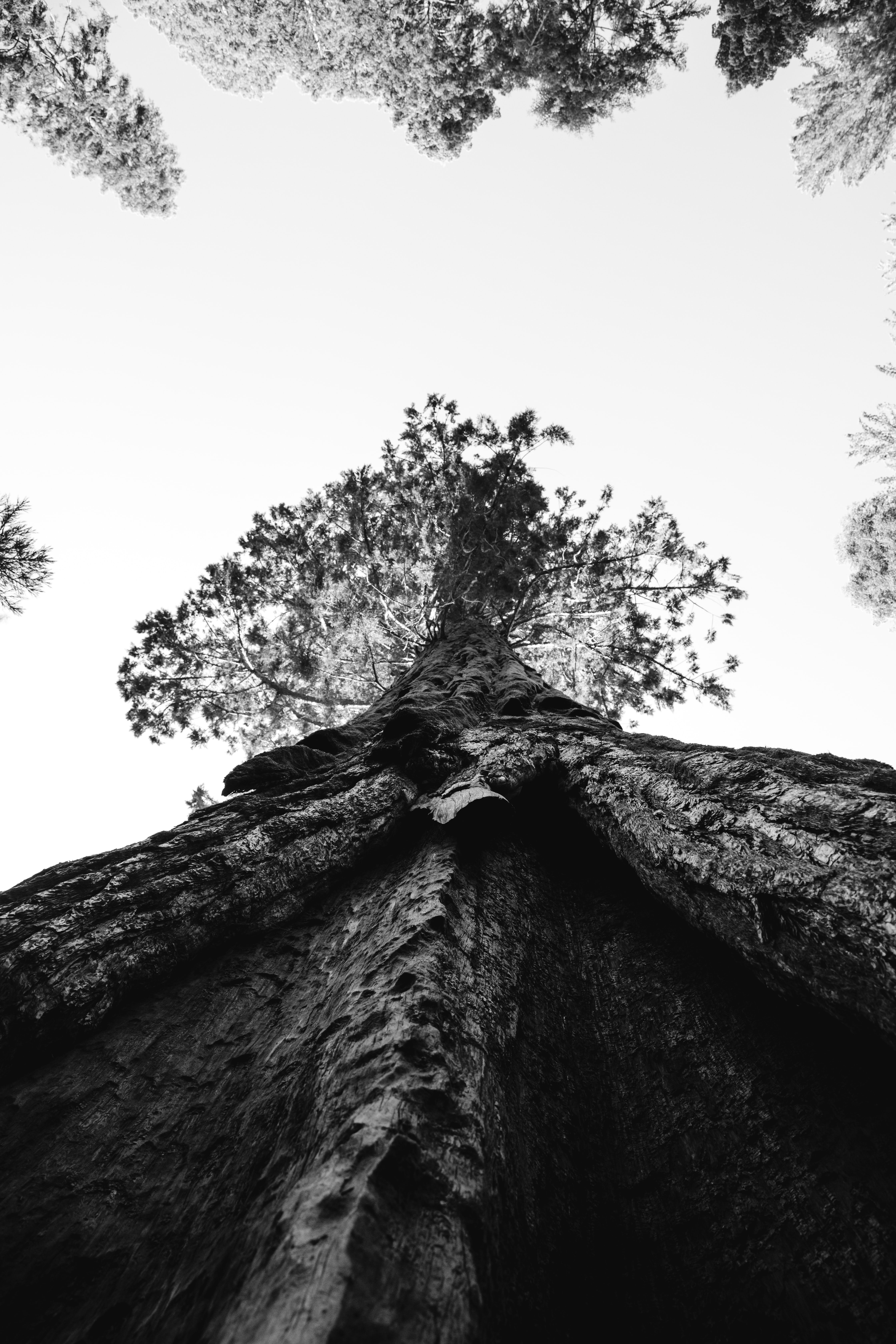 low angle and grayscale photography tree