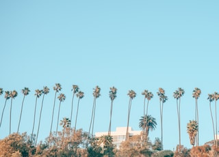 palm trees during daytime