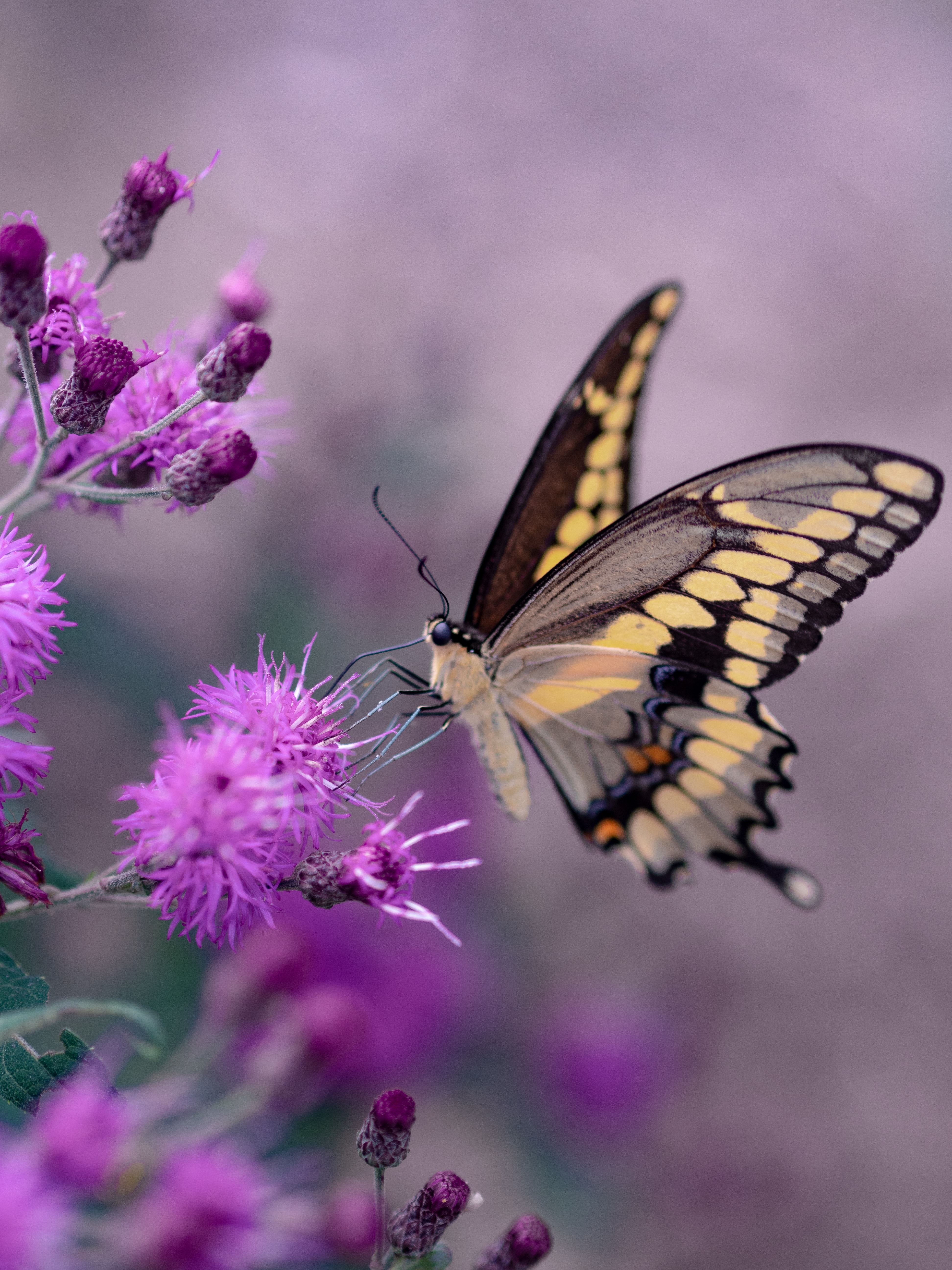shallow focus photography of yellow and black butterfly
