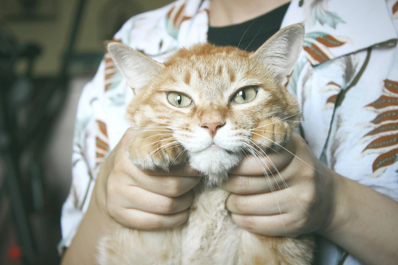 person holding orange tabby cat