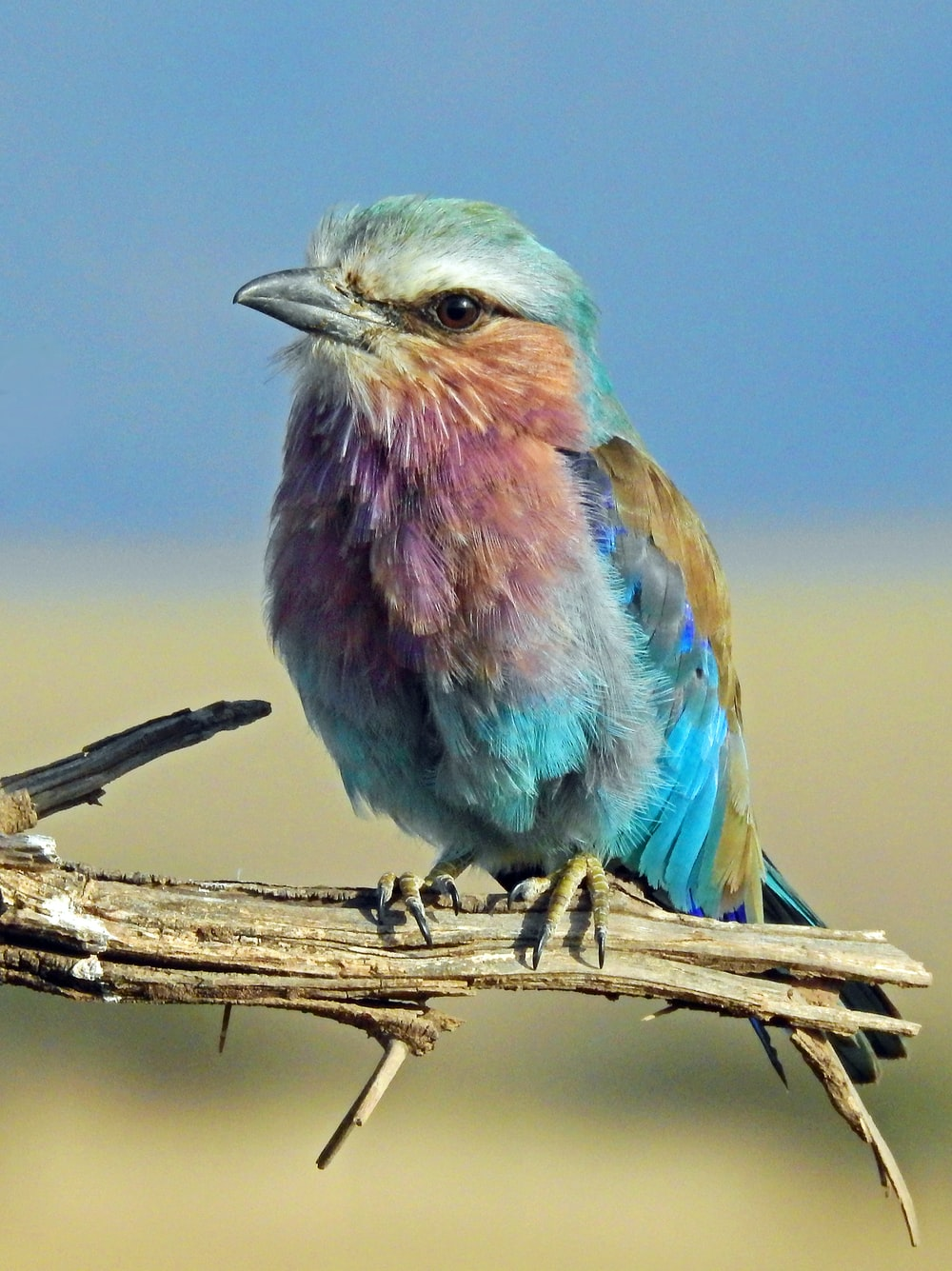 shallow focus photography of multi colored bird