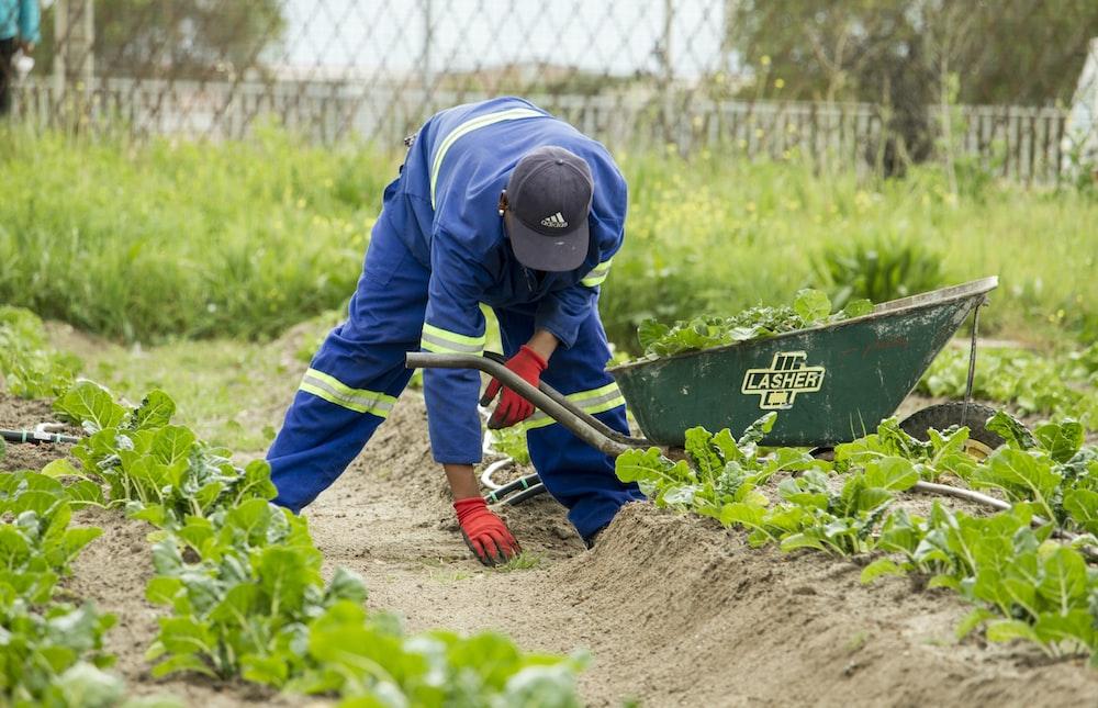 man grabbing a green grass wearing pair of red garden gloves