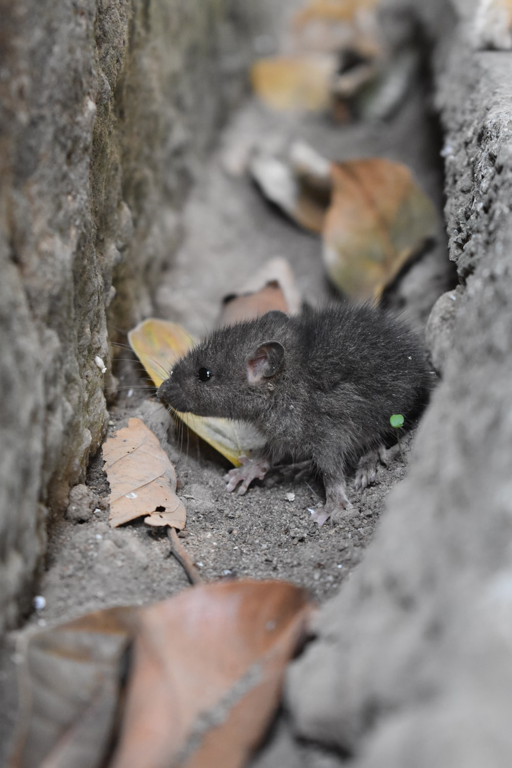 black mouse on gray concrete pavement