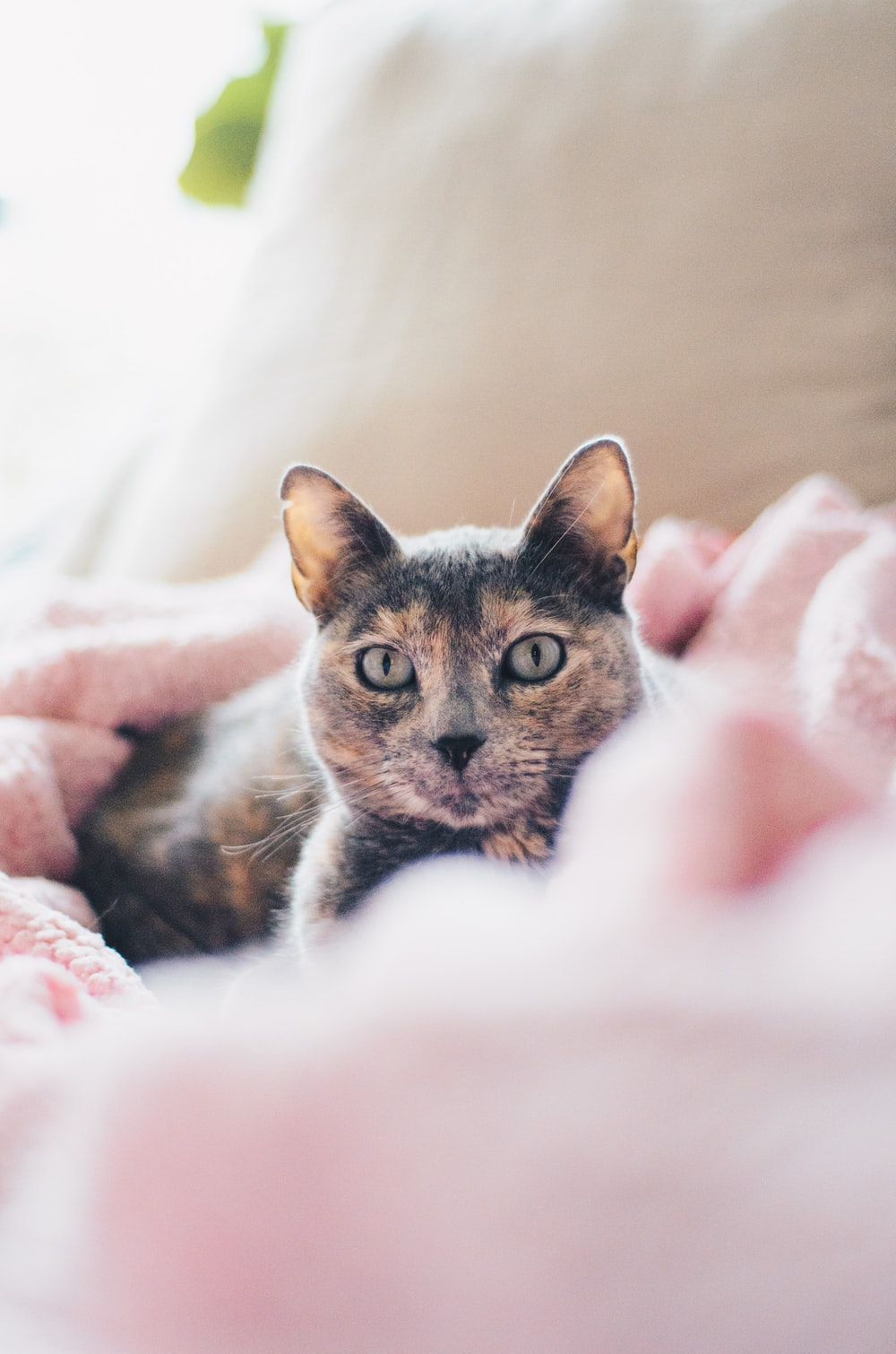 brown and gray cat on pink textile