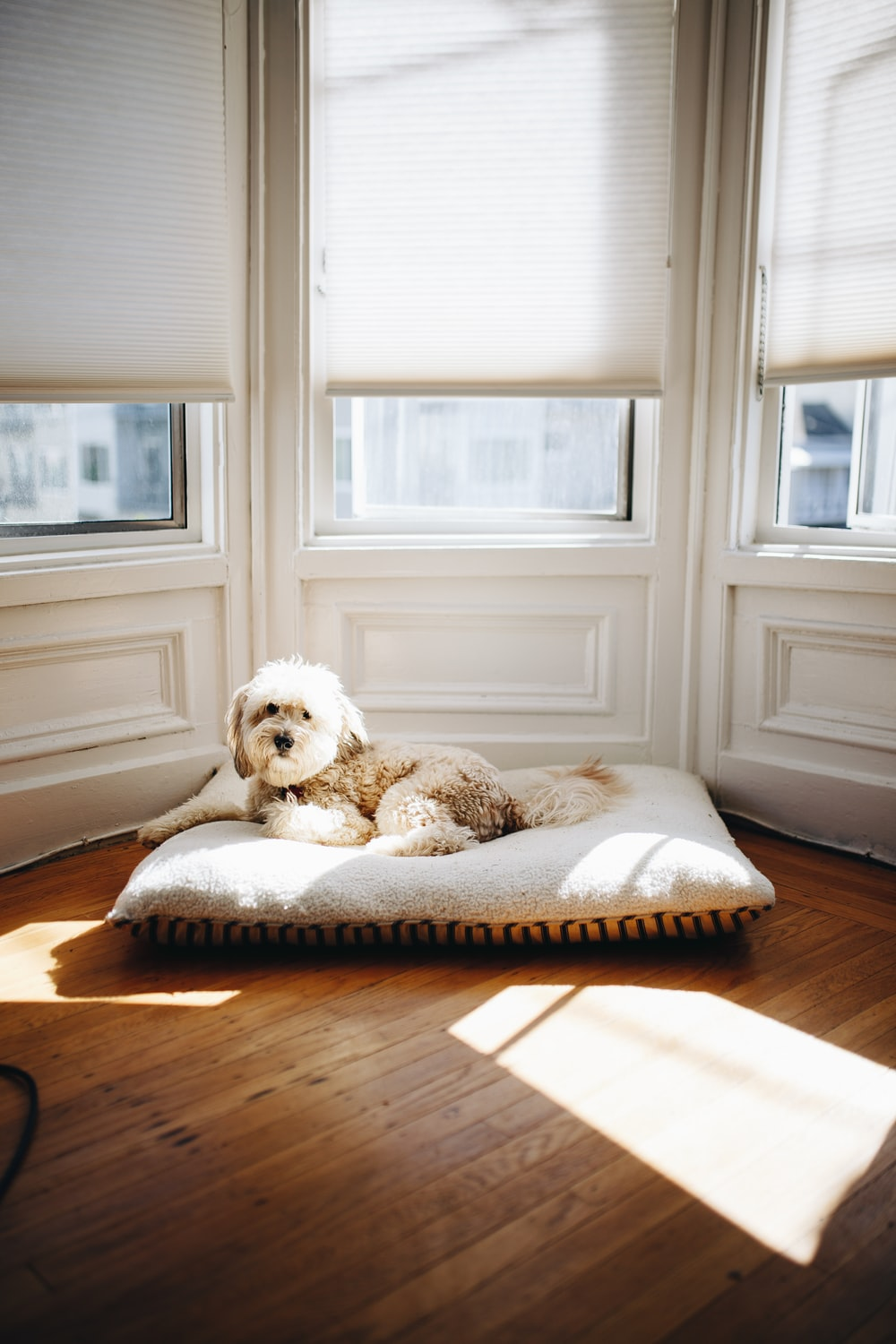 dog lying on pet bed near window with sun passing through
