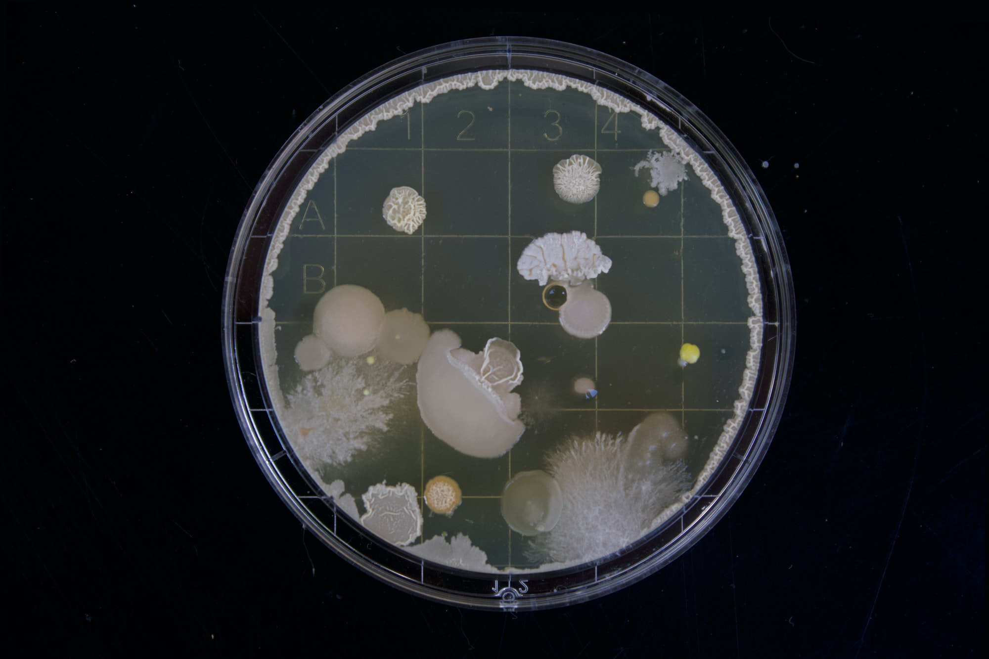 MIT geniuses use machine learning to find superbug-resistant antibiotic