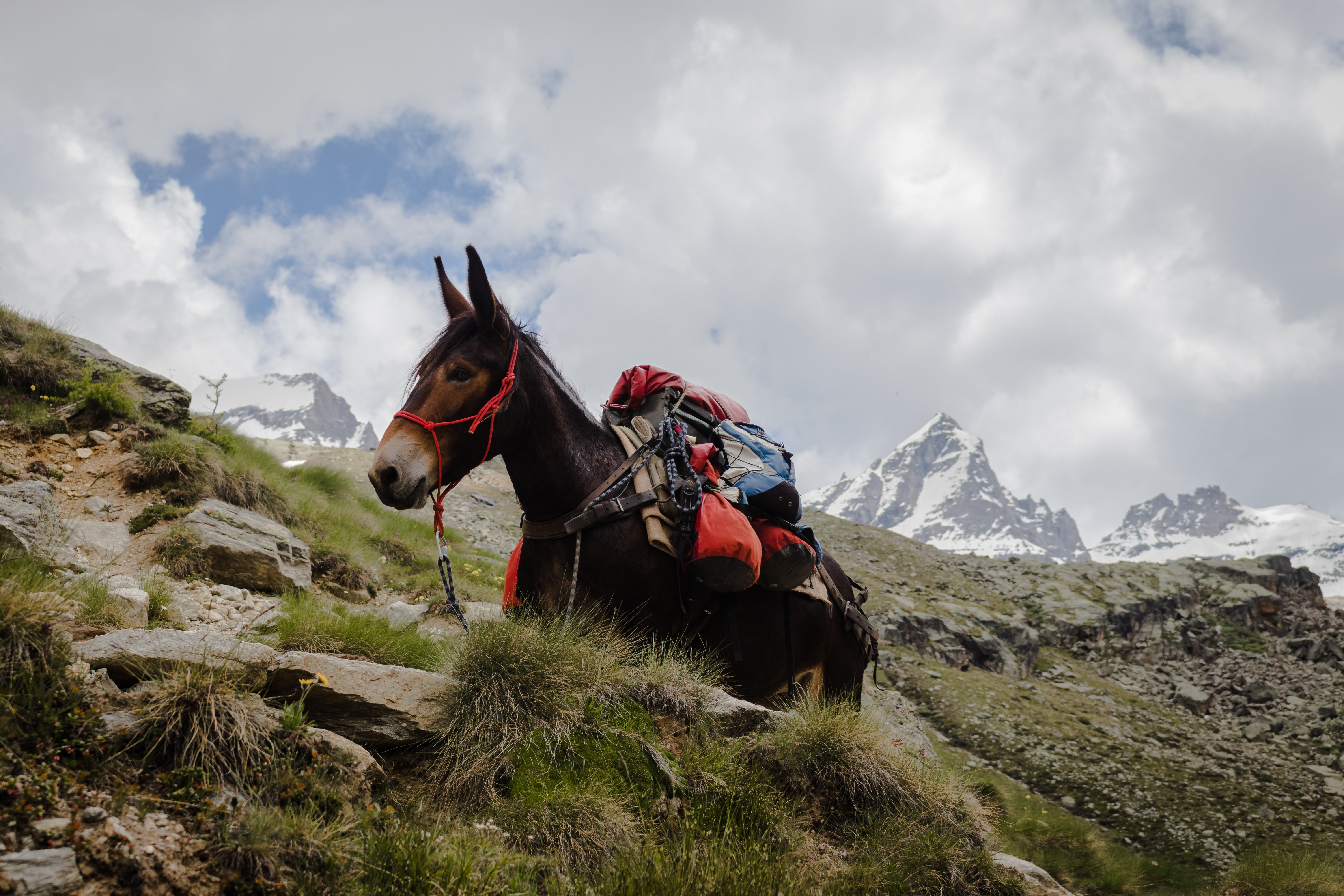 person riding on horse on top of mountain