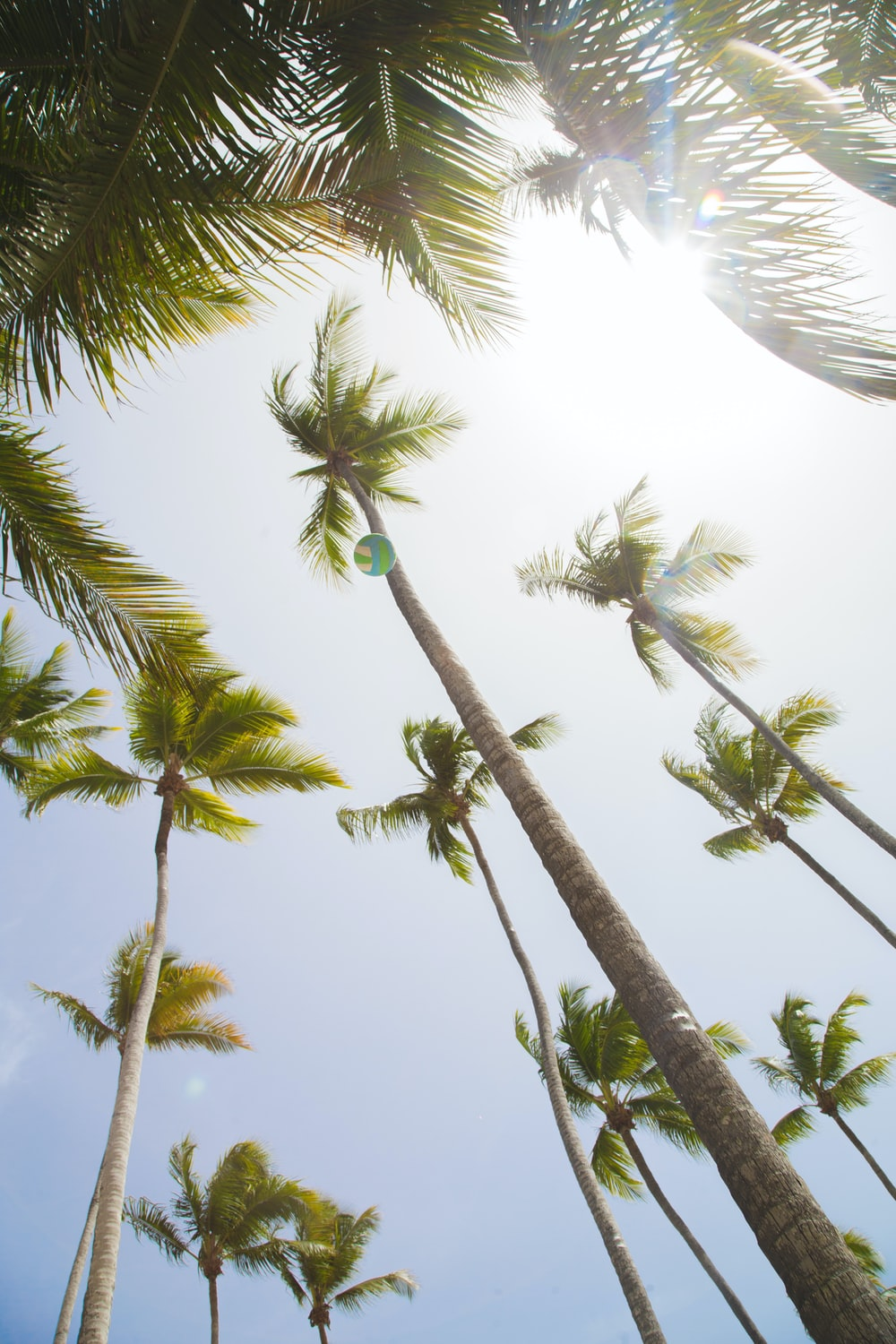 low angle coconut trees
