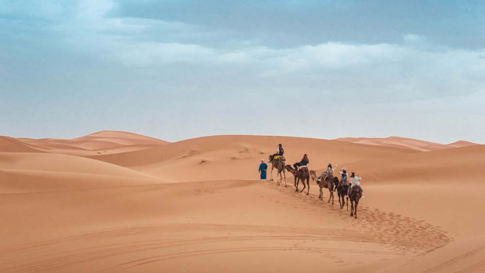 people riding on camel during daytime