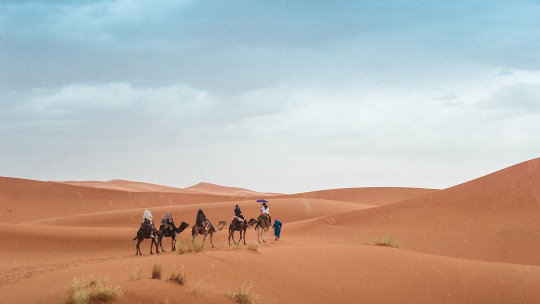 people riding on camel