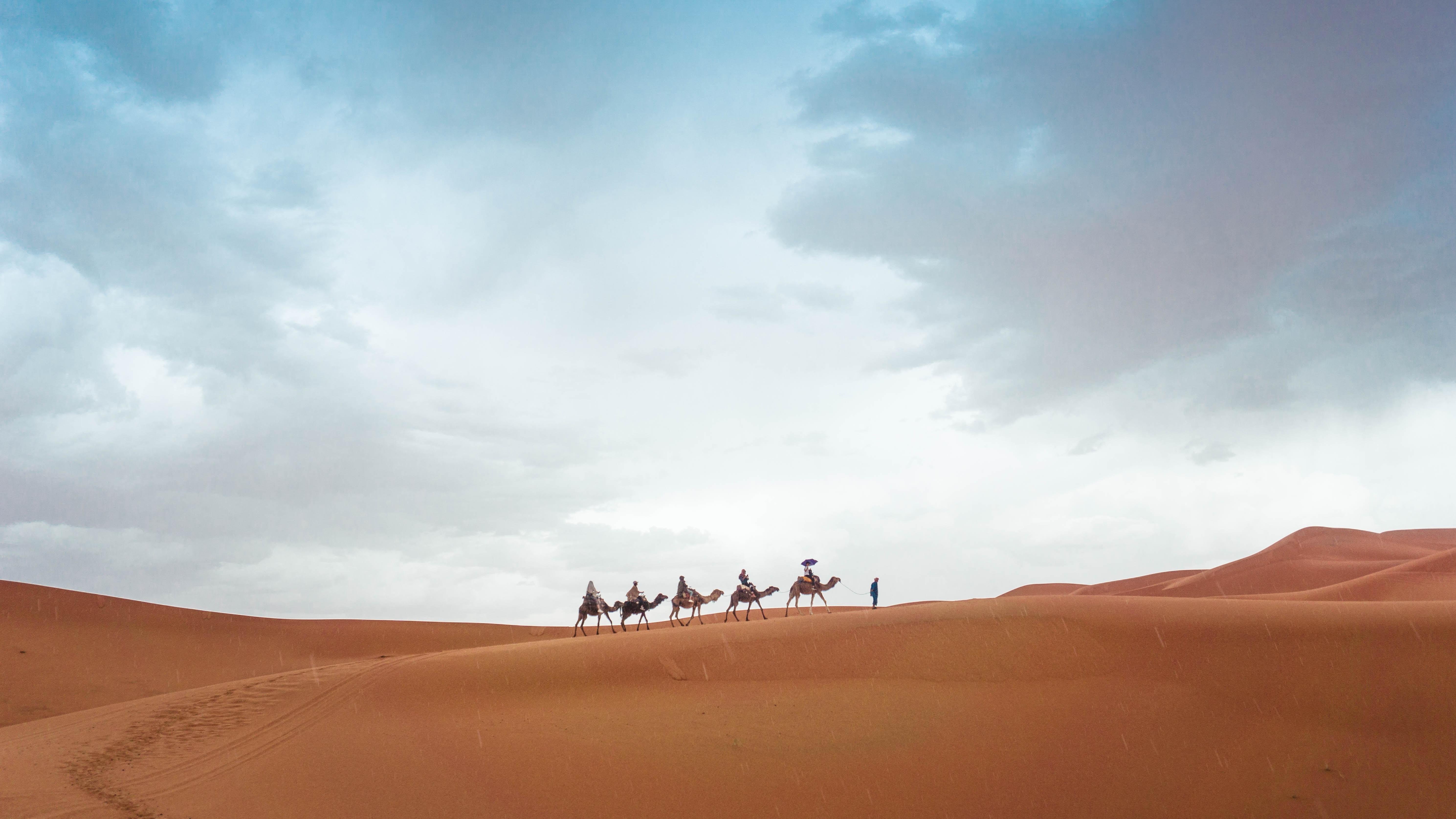 five camels walking on sand during daytime