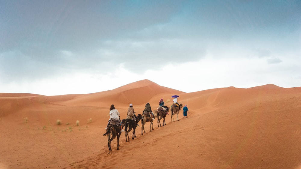 group of people riding camels on desert