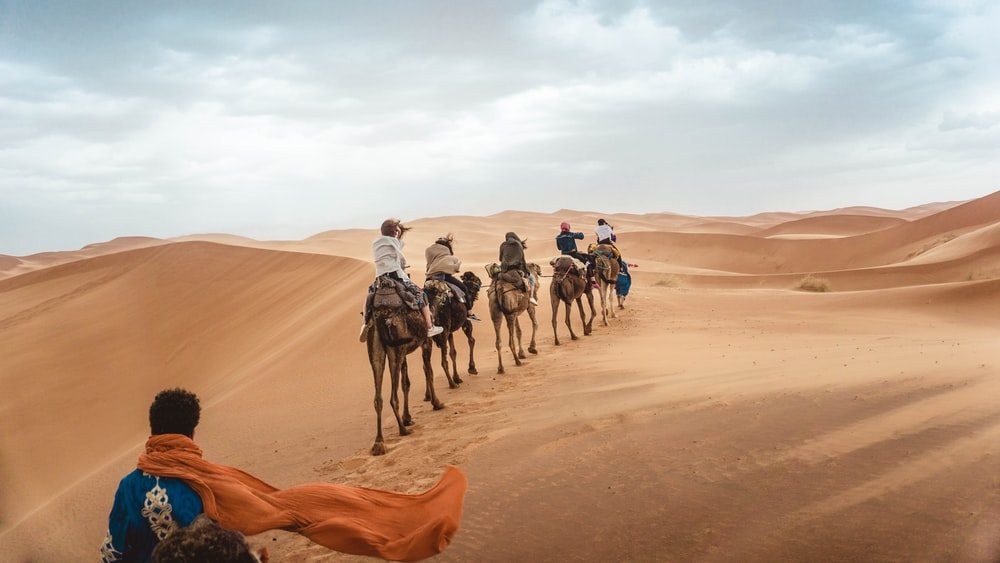 several people riding camels on desert during daytime