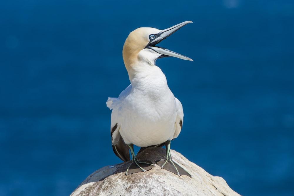 gull perching on stone