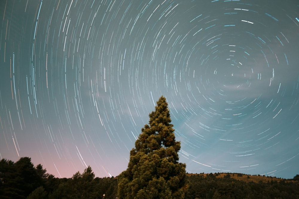 long exposure photography of stars and pine tree