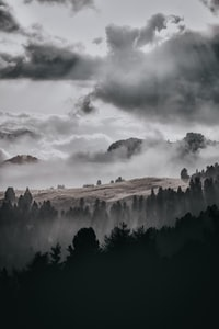 trees surround by fog under cloudy sky